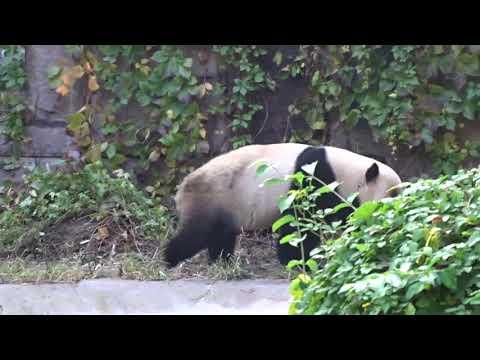 BEIJING ZOO - Panda House