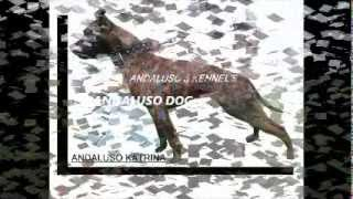 American Pit Bull Terrier Andaluso Kennel