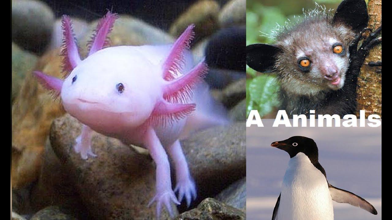 ANIMALS - A ANIMALS - PICS OF ANIMALS