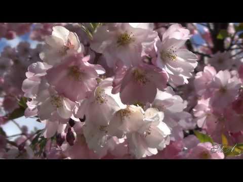 ♫  Для души...  Чудесные мгновения...  Карен Саркисян - Поэзия.  Karen Sargsyan - Poetry.