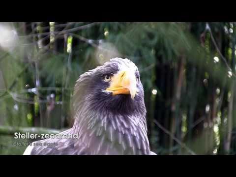 Diergaarde Blijdorp (Rotterdam Zoo)