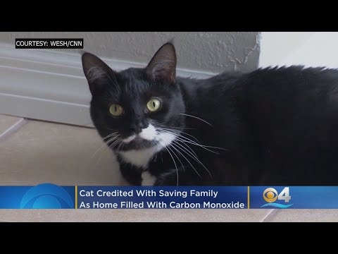 Cat Saves Florida Family From Carbon Monoxide Poisoning