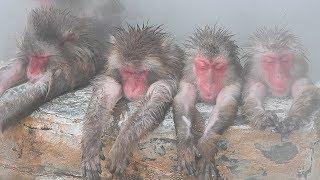 北海道函館市の市熱帯植物園でサルの温泉入浴が始まり、気持ちよさそう...