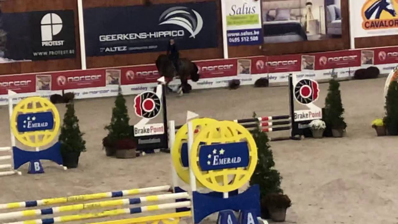 Training Show 3.5 yo November Azelhof