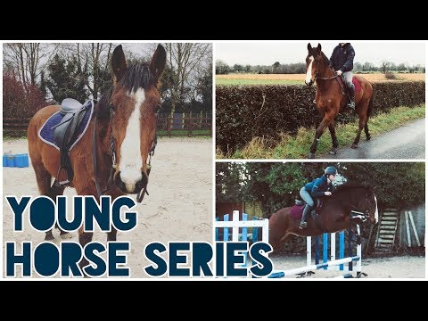 WEEKLY RIDING ROUTINE FOR YOUNG HORSES