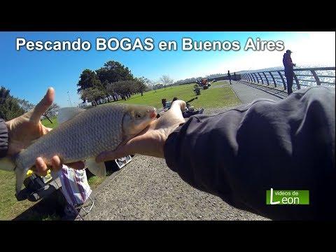 Pescando BOGAS en Buenos Aires