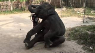 Шоу со слониками на о. Самуи Тайланд