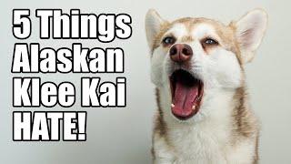 5 Things Alaskan Klee Kai Hate