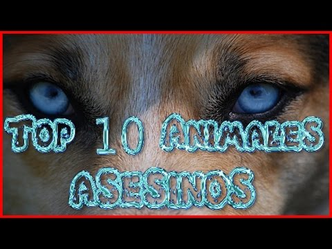 Top 10 Animales Asesinos
