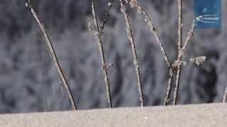 [Service-MULTI] Шипованная зимняя резина для велосипеда Schwalbe(, 2014-11-13T09:15:32.000Z)