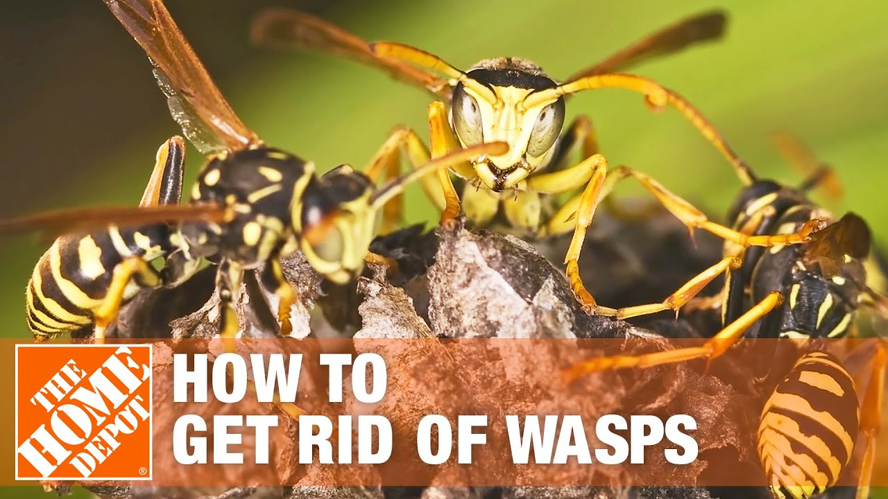How to Get Rid of Wasps - The Home Depot