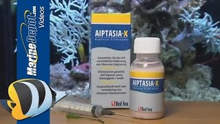 Red Sea Aiptasia X - Product Overview
