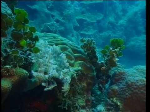 Découverte du Monde - Coraux et fonds marins