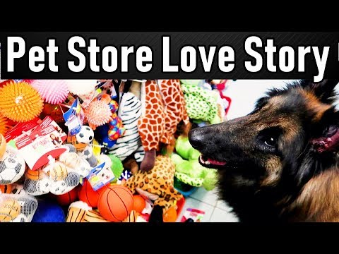 Trip to the Pet Store - Dog Goes Shopping!
