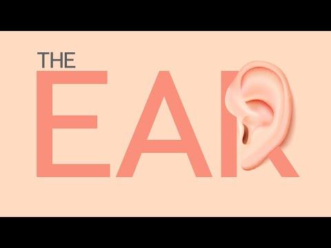 Life Sciences Gr12 The Ear