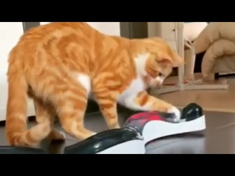 Kitten Plays With High Tech Cat Toy