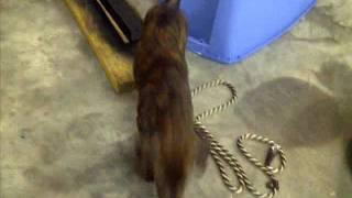 Sonny @ 4 Months Old. Boxer/hound/pitbull Mix