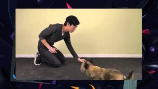 [epic Dog Training] Train A Dog To Stop Barking