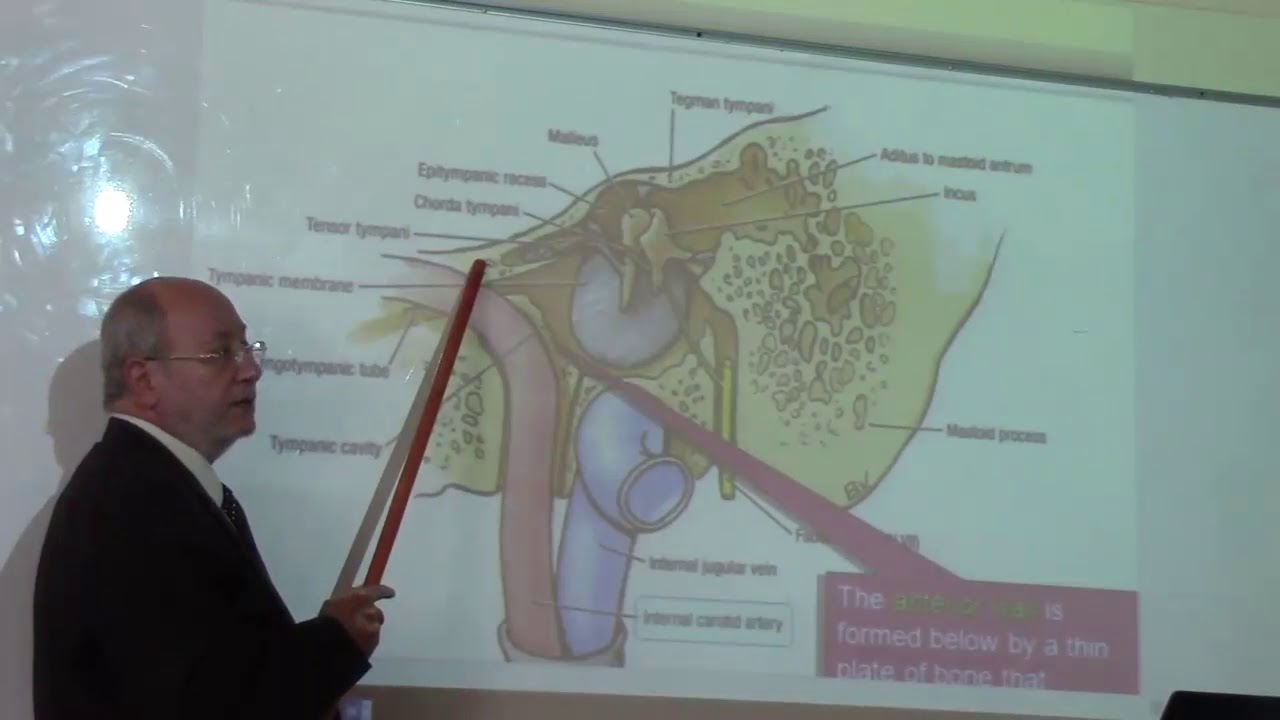 anatomy of the middle ear by Dr. Wahdan - YouTube