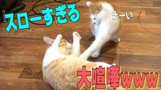 時間の流れがゆったりしています。 ・Twitterフォローしてね! @atsushi...