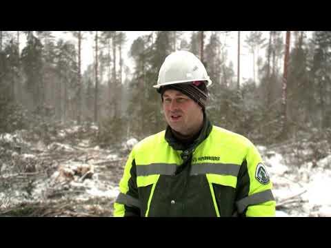 Лес: предприятия «Белозерский леспромхоз» и «Белозерсклес»