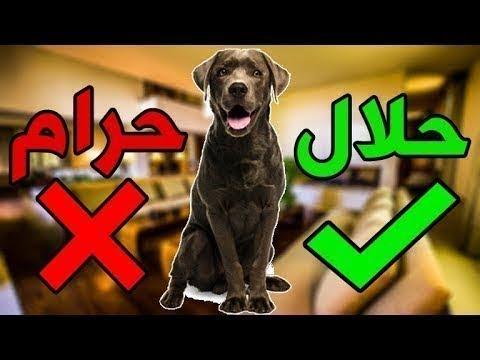 تربية الكلاب حرام ولا حلال و ازاي تقنع اهلك Youtube