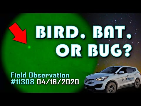 Bird on Night Vision? (04/16/2020)