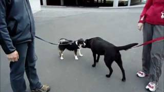 Learning Not To Bark Around Other Dogs