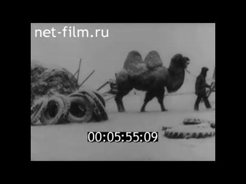 1986г. колхоз имени Чапаева Палласовский район Волгоградская обл