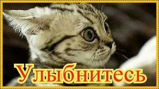 Смешное про животных Приколы с котами Видео про котов Кошки Позитив Создай себе хорошее настроение