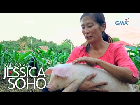 Kapuso Mo, Jessica Soho: Baboy o ako?