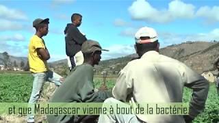 Une chercheuse malgache en lutte contre Ralstonia solanacearum