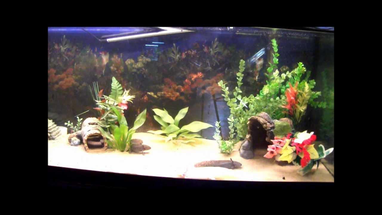 Decoration Aquarium Axolotl