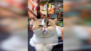 Смешные видео про кошек Октябрь 2019 Смешные коты и кошки приколы 2019 funny cats animals 100