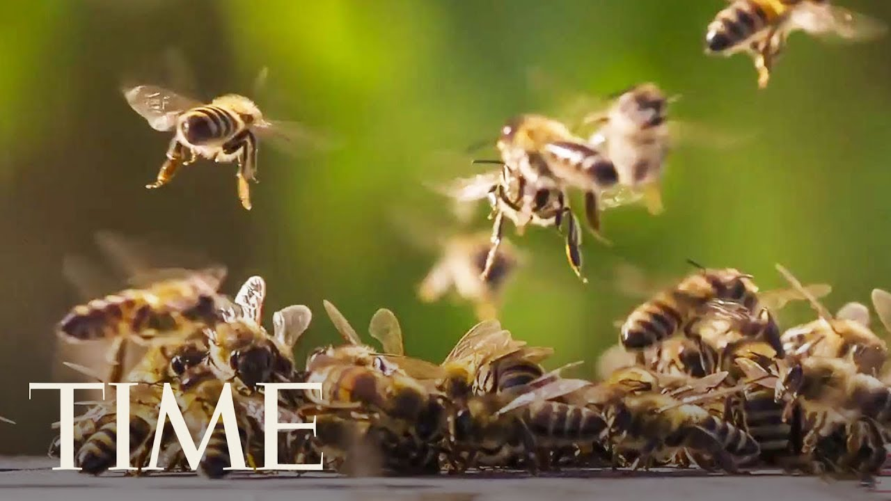 Among The Many Talents Of The Humble Honey Bee: Arithmetic | TIME