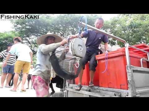 FishingKaki.com - Pasir Ris Pond Transformed: Unloading Of Fish