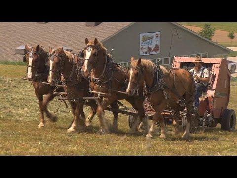 Wooing the Amish vote in the 2016 election