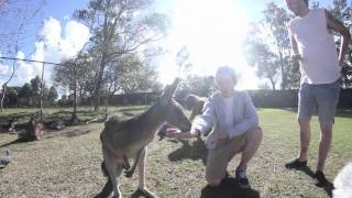 Download On Tour with While She Sleeps: Koalas & Kangaroo Goop! MP3 song and Music Video