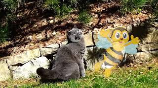 Уфень и Пчела