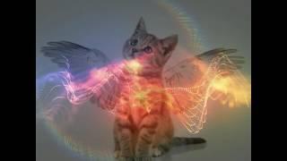 Кошки ангелы живут рядом снями