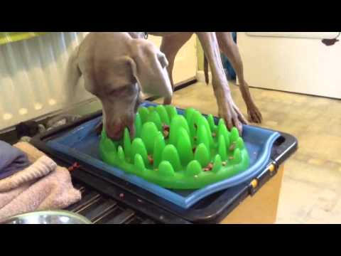 Green feeder slow feed dog bowl