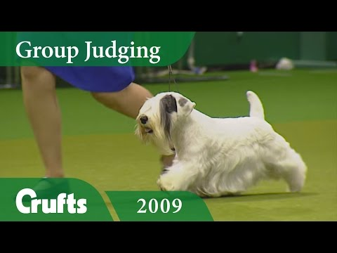 Sealyham Terrier wins Terrier Group Judging at Crufts 2009 | Crufts Classics