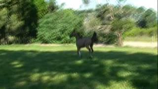 music hannah montana Horse- Garoa