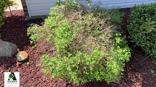 Allen's Tree Service - Lawn Care Tips - Call 636-532-5535