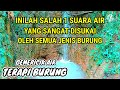 Terapi Ampuh Suara Gemericik Air Mengalir Suara Air Terapi Burung  Mp3 - Mp4 Download