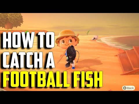 How To Catch A Football Fish | Football Fish ACNH | Football Fish Animal Crossing New Horizons