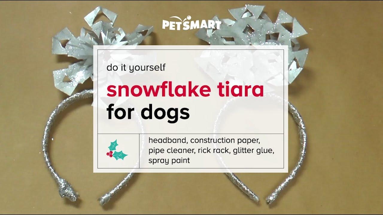 PetSmart Workshop: DIY Snowflake Tiara for Dogs - YouTube