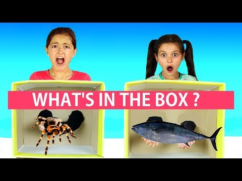 Thumbnail: What's in the Box Challenge! Family Fun Challenge!! 😜😂