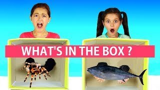 What's in the Box Challenge! Family Fun Challenge!! 😜😂