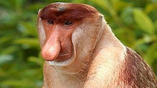 Los Monos Mas Raros Del Mundo